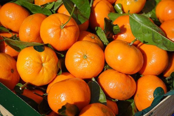Kuo klementinai skiriasi nuo kitų citrusinių vaisių?