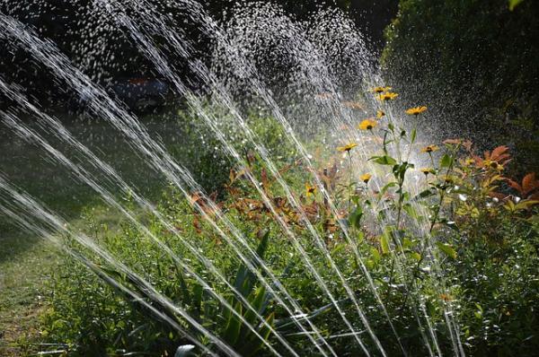 Kokius purkštuvus rinktis daržo ir sodo laistymui?