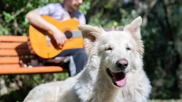 Muzikos terapija: kaip garsai padeda augintiniui?