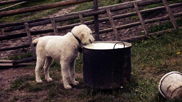 Jautrumas maistui bei šunų maisto netoleravimas