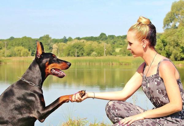 Kaip išmokyti šunį duoti labas?
