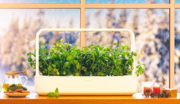 Jūsų pačių auginti pomidorai sausio mėnesį? Kodėl gi ne!